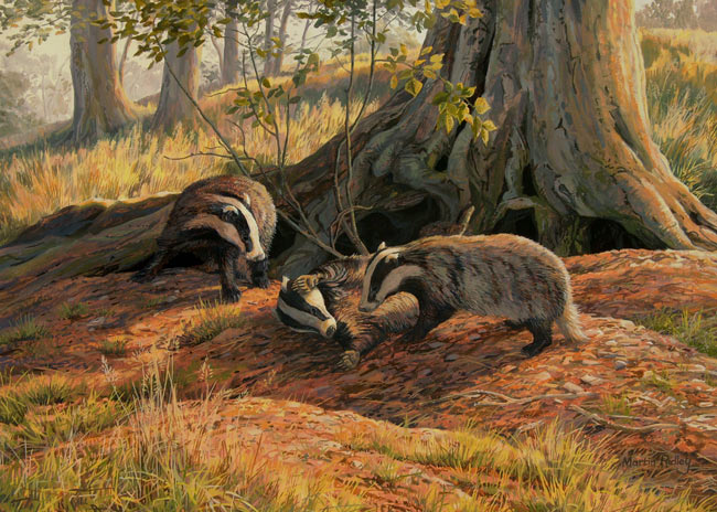 Badger prints for sale - canvas print of badgers at play