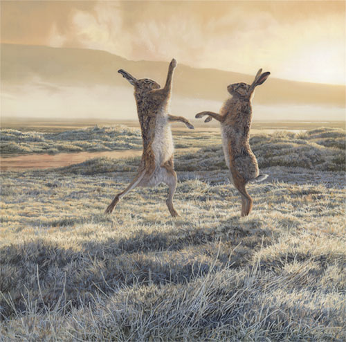 Boxing Hares in a frosty field as the mist lifts - Brown hares oil painting by Martin Ridley