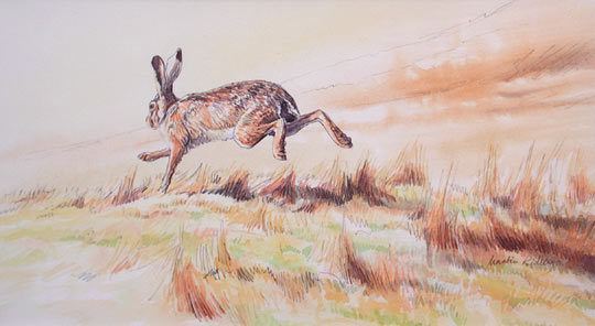 brown hare picture - original watercolour