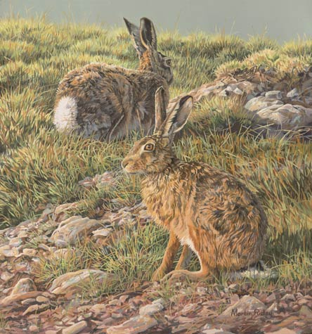 Brown hare painting for sale