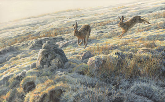 Brown hares original oil painting