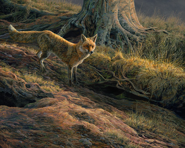 Fox prints for sale - canvas print of a red fox at the earth by Martin Ridley