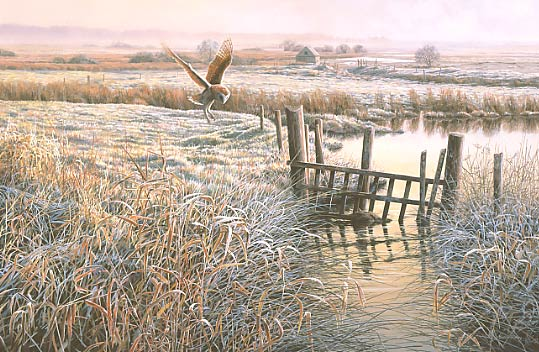 Hunting barn owl print - detailed painting of a frosty morning in the marshes