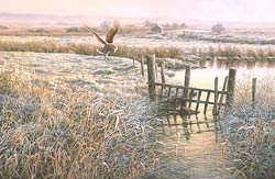 hunting barn owl print - frosty morning