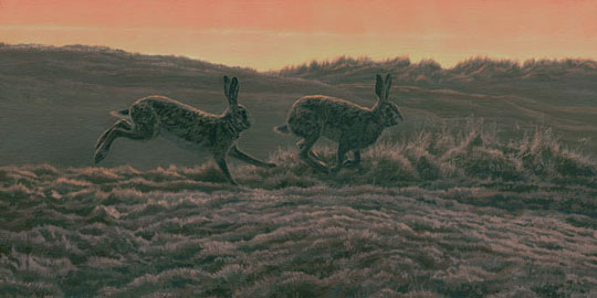 brown hares picture - canvas print for sale