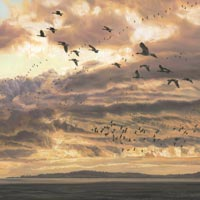 Evening Flight - Print of geese heading for their roost