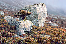 golden eagle print