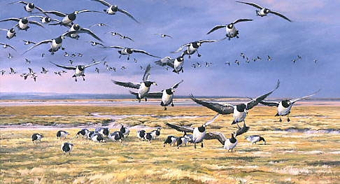 geese print - limited edition print of barnacle geese - wildlife prints for sale