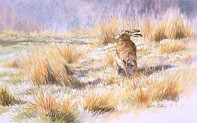 brown hare print - picture of a brown hare