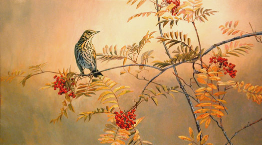 song thrush,  Turdus philomelos pictire, bird painting
