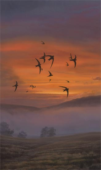An original oil painting of swifts in flight. Swifts picture