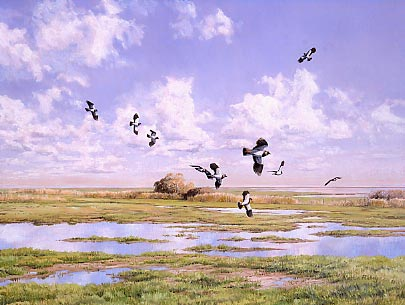Wildlife art commissions: Lapwings by Martin Ridley