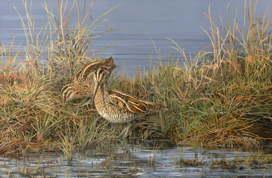 Feeding common snipe - an original game bird oil painting