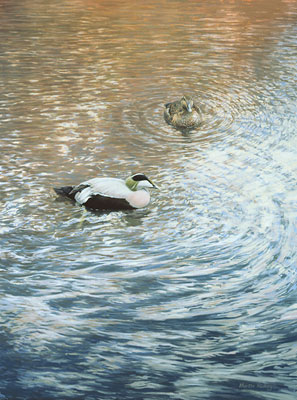 eider ducks - original painting of eiders
