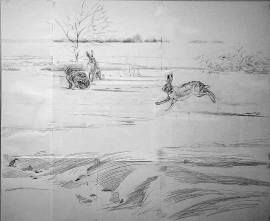 brown hare drawing Lepus europaeus