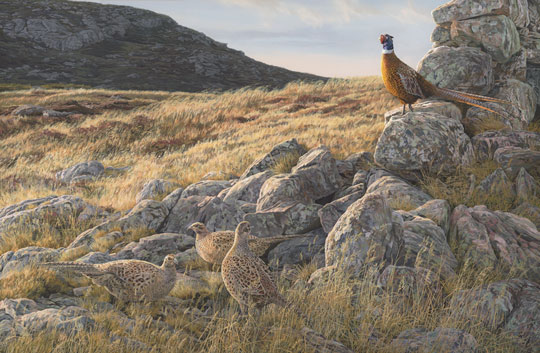 cock and hen pheasants oil painting for sale