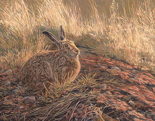 Brown Hare - Oil Painting for Sale