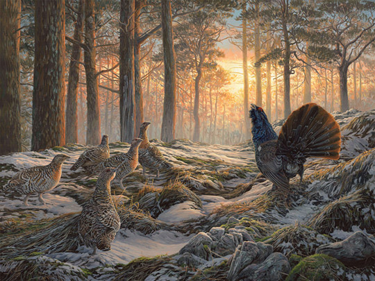 Capercaillie painting for sale - gamebirds