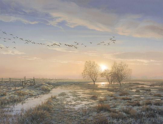 An original oil painting of a skein of geese at sunrise. Original oil painting for sale by Martin Ridley