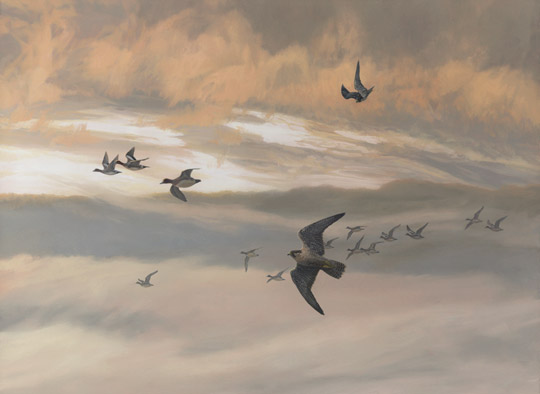 Peregrine falcons in flight. Painting of two peregrines hunting wigeon ducks