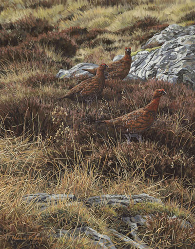 Red Grouse oil painting for sale -  original oil painting of red grouse  by artist Martin Ridley