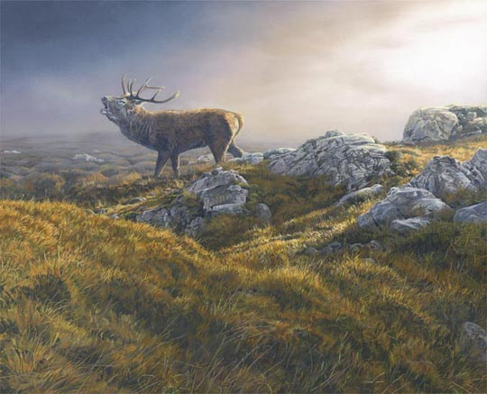 bellowing red deer stag picture - rutting stag oil painting
