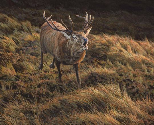 Charging red deer stag oil painting