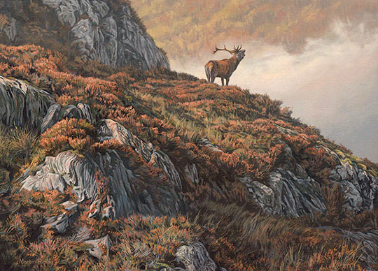 Roaring red deer stag oil painting for sale