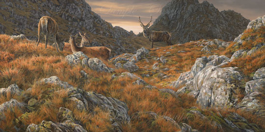 Herd of stags at sunset