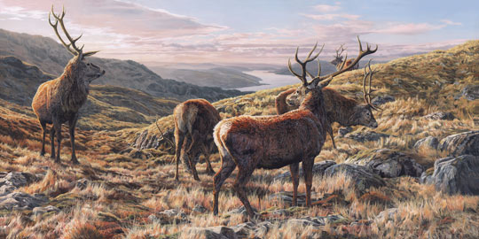Original oil painting Red deer stags above Loch Sunart